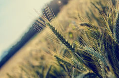 rolnictwa comcept Obraz Royalty Free