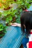 Rolnictwa gospodarstwo rolne Szczęśliwego azjatykciego dziecka przyglądająca świeża truskawka Fotografia Royalty Free