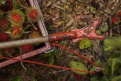 Rolnictwa narzędzie Zdjęcie Royalty Free