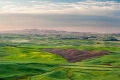 Rolnictwa pole w Palouse Fotografia Stock