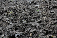Rolnictwa pole z czerni ziemią dla zasadzać zieleni liść natury wzoru tekstura fotografia stock