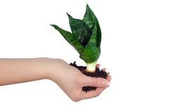 rolnictwa ręki roślina Obraz Stock