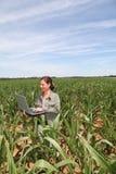 rolnictwa środowisko Fotografia Stock