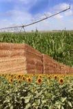 Rolnictwo Fotografia Stock