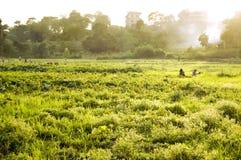 Rolnictwo Zdjęcia Stock