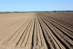 rolnictwo zdjęcie stock