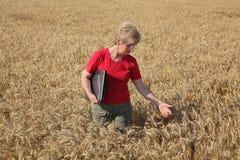 Rolnictwo, agronom egzamininuje pszenicznego pole Obraz Royalty Free