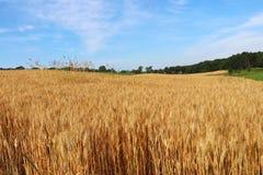 Rolnictwo agronomia i uprawiać ziemię tło, Obrazy Stock