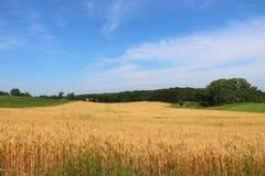 Rolnictwo agronomia i uprawiać ziemię tło, Fotografia Stock