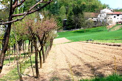 rolnictwo biologiczny Zdjęcie Stock