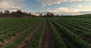 Rolnictwo czasu upływu słońce zaświeca obfitego żniwo, system irygacyjny, bruzda kultywujący pole krajobraz zbiory
