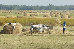 Rolnictwo, Etiopia, Afryka Fotografia Royalty Free