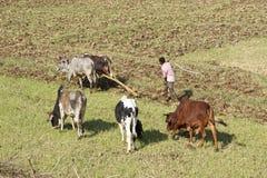 Rolnictwo, Etiopia, Afryka Zdjęcie Stock