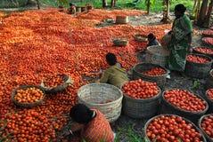 rolnictwo hindus Zdjęcia Stock