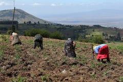 Rolnictwo i orny uprawiać ziemię w Kenja fotografia stock