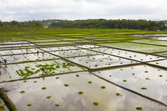 Rolnictwo irlandczyka pole Obraz Stock