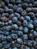 Rolnictwo, jesień, jagoda, błękit, zbliżenie, kolor, deser, dieta, je, jedzenie owocowy, świeży, uprawia ogródek, grupuje, zbiera Zdjęcie Stock