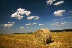 rolnictwo krajobraz Fotografia Royalty Free