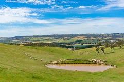Rolnictwo krajobraz padok z cakla zapasem fotografia stock