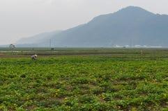 rolnictwo krajobraz Piękny widok śródpolni Azjatyccy rolnicy r rośliny tradycyjną metodą używa rolniczego instrum fotografia royalty free
