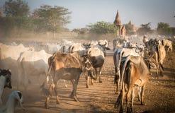 Rolnictwo Myanmar Zdjęcia Stock