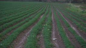 Rolnictwo, niecka bruzda kultywujący pole zbiory