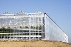 Rolnictwo pomidoru szklarnia Zdjęcie Stock