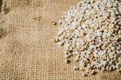 rolnictwo produkty, job& x27; s łzy Obrazy Royalty Free