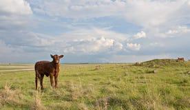 rolnictwo przemysł obrazy stock