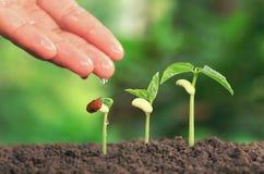 Rolnictwo ręki nurtur nawadnia młode rośliny r kroka dalej w ten sposób Zdjęcia Royalty Free
