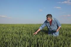 Rolnictwo, rolnik egzamininuje pszenicznego pole u?ywa? pastylk? obrazy stock