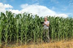 Rolnictwo, rolnik lub agronom w kukurydzanym polu, Obrazy Stock