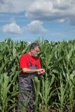 Rolnictwo, rolnik w kukurydzanym polu Fotografia Royalty Free