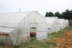 Rolnictwo szklarnia Zdjęcia Stock