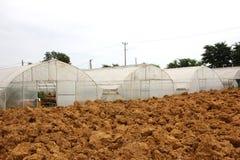 Rolnictwo szklarnia Obrazy Stock
