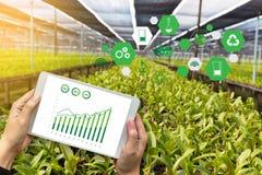 rolnictwo technologii pojęcia mężczyzna agronom Używa pastylkę Int Obrazy Royalty Free