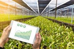 rolnictwo technologii pojęcia mężczyzna agronom Używa pastylkę wewnątrz Zdjęcie Stock