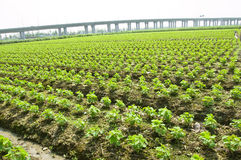 rolnictwo transport Zdjęcie Royalty Free