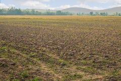 Rolnictwo uprawia ziemię pole ziemi ziemi wsi krajobraz Zdjęcie Stock