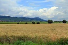Rolnictwo w Alsace, Francja zdjęcia royalty free
