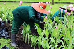 rolnicy Zdjęcia Royalty Free