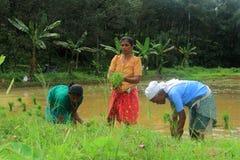 rolnicy Zdjęcie Royalty Free