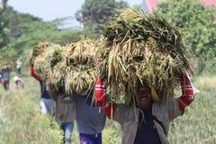 rolnicy fotografia royalty free