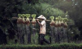rolnicy zdjęcie stock