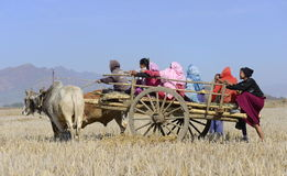 Rolnicy na bullock furze w irlandczyka polu Zdjęcia Stock