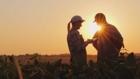 Rolnicy obsługują i kobieta komunikuje w polu przy zmierzchem Używa pastylkę zdjęcia royalty free