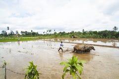 Rolnicy Orzą pola fotografia stock