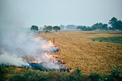 Rolnicy pali wysuszonego ryżu pole w India obrazy stock