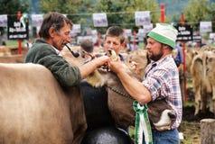 Rolnicy podczas wystawy krowy przy Engelberg Fotografia Royalty Free