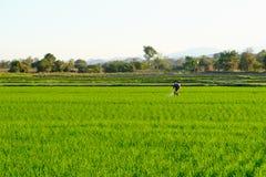 Rolnicy pracują w irlandczyka polu rozpylać użyźniacz Obrazy Royalty Free